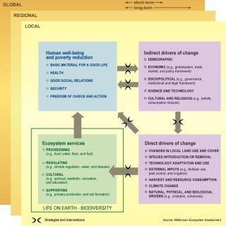 MEAConservationStrategies